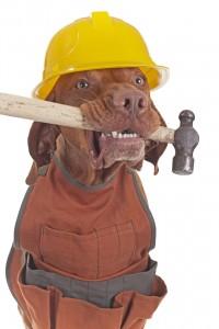 work dog