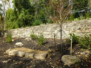 A newly planted Winter King hawthorn and our new boulder retaining wall, created by LM Parks & Rec crew